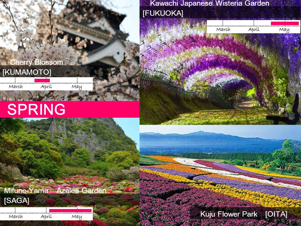 SPRING Kawachi Japanese Wisteria Garden [FUKUOKA]